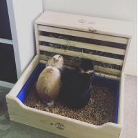 Two lop eared rabbits using large litter tray with hay feeder by rabbit toys australia