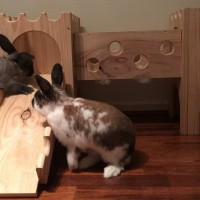 Biscuit and Mackie with their wooden bunny castle by rabbit toys australia