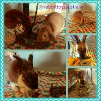 Elliot the bunny eating willow treats from rabbit toys australia