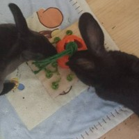 Letty and Whoopsy with their mini carrot patch by rabbit toys australia