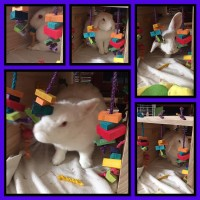 Luna and her wooden play tunnel from rabbit toys australia