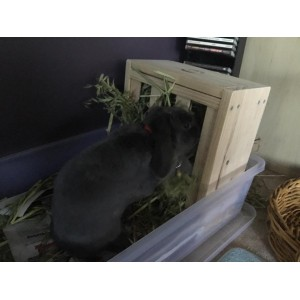 Bunny Hay Feeder Box with Heart