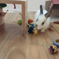 A custom bunny play tunnel from rabbit toys australia